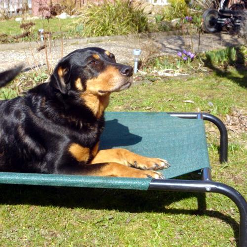 details zu hundebett hunde haus h hle bett hundekorb hund hundeh tte pictures to pin on pinterest. Black Bedroom Furniture Sets. Home Design Ideas